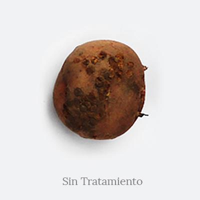 sarna polvosa_Desinfeccion de suelos